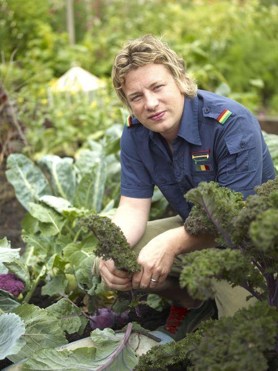 """(1. Staffel) - Ohne Chemikalien züchtet Jamie Oliver Gemüse für das Londoner Restaurant """"Fifteen"""" und seine mediterrane Küche ... - Bildquelle: David Loftus Fremantle"""