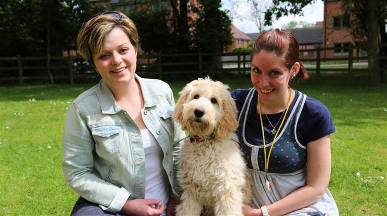Ein Hundewelpe wirbelt das Familienleben ganz schön durcheinander. Zehn grundverschiedene Familien wagen es dennoch, ein aufgewecktes kleines Fellkn...