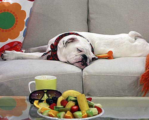 fruehstuecksfernsehen-studiohund-lotte-in-action-im-studio-040 - Bildquelle: Ingo Gauss