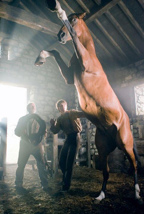 Als Alberts (Jeremy Irvine, r.) Vater (Peter Mullan, l.), ein armer englischer Farmer, ein edles Reitpferd ersteigert, nur um seinen Verpächter zu ü... - Bildquelle: Dreamworks II Distribution Co., LLC.  All Rights Reserved