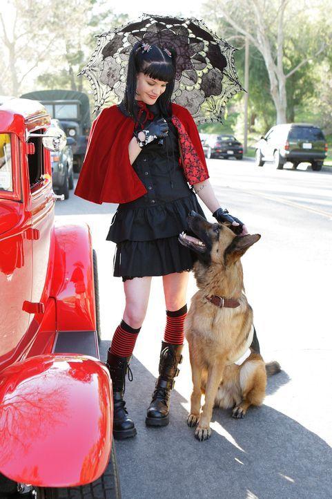 Abby (Pauley Perrette) glaubt nicht, dass der Hund, der McGee angefallen hat, wirklich aggressiv ist und versucht auf eigene Kappe die Unschuld des... - Bildquelle: CBS Television