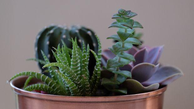 umtopfen: zimmerpflanzen - sat.1 ratgeber, Garten und Bauten