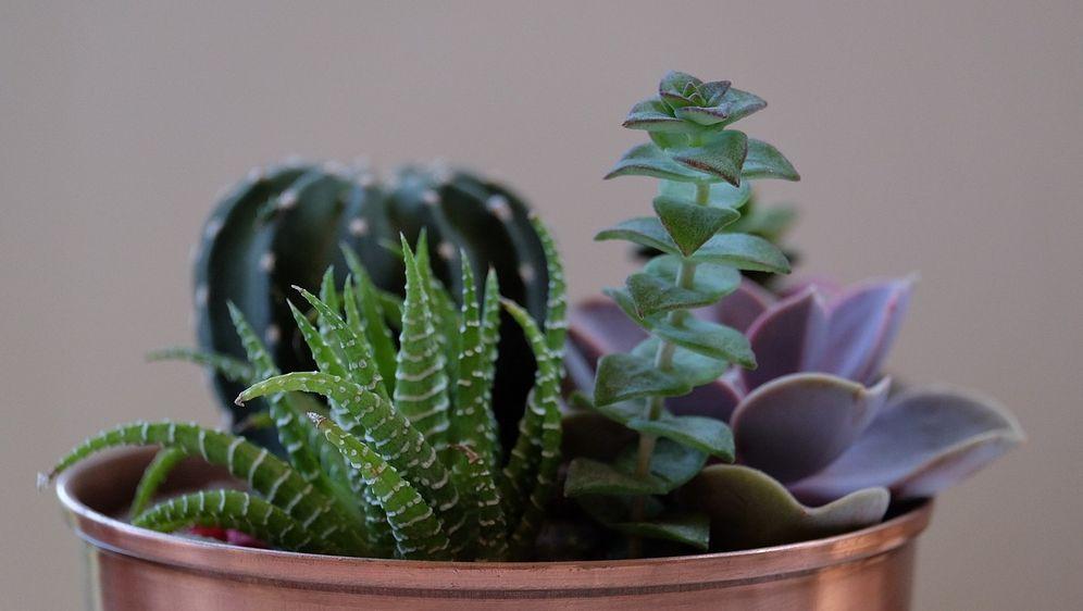Umtopfen: Zimmerpflanzen  - Bildquelle: Pixabay.com