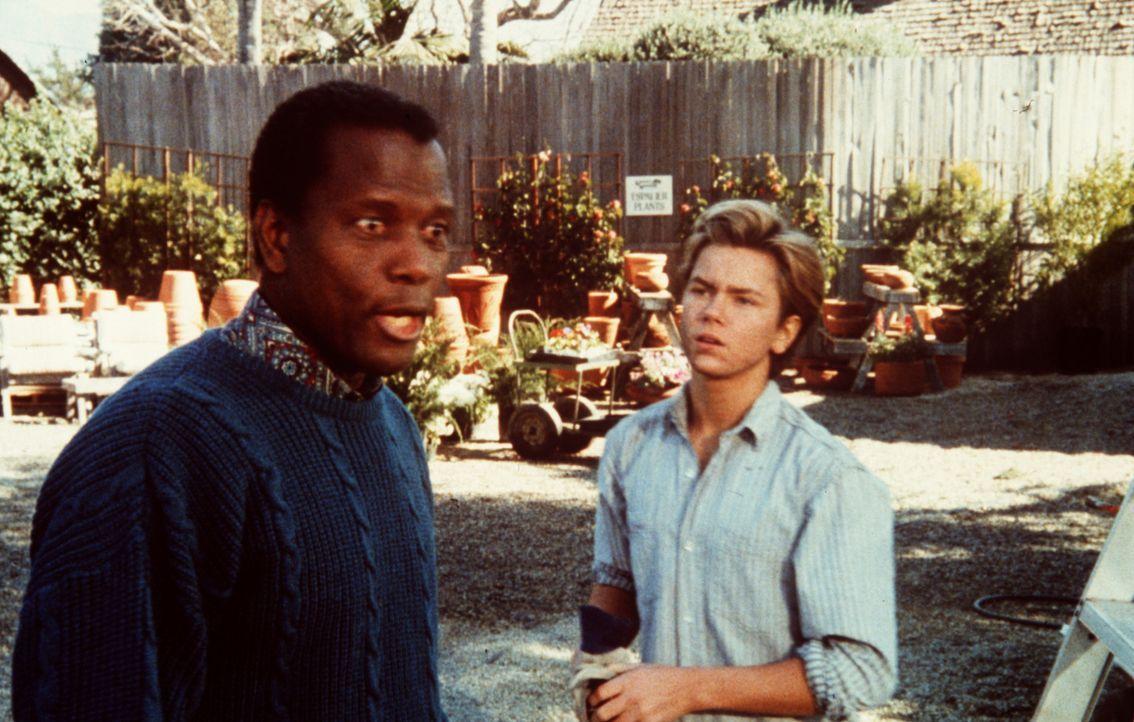 Parmenter (Sidney Poitier, l.) quartiert sich in der Nachbarschaft von Jeffrey (River Phoenix, r.) und dessen Eltern ein, um diese besser observiere... - Bildquelle: Columbia Pictures