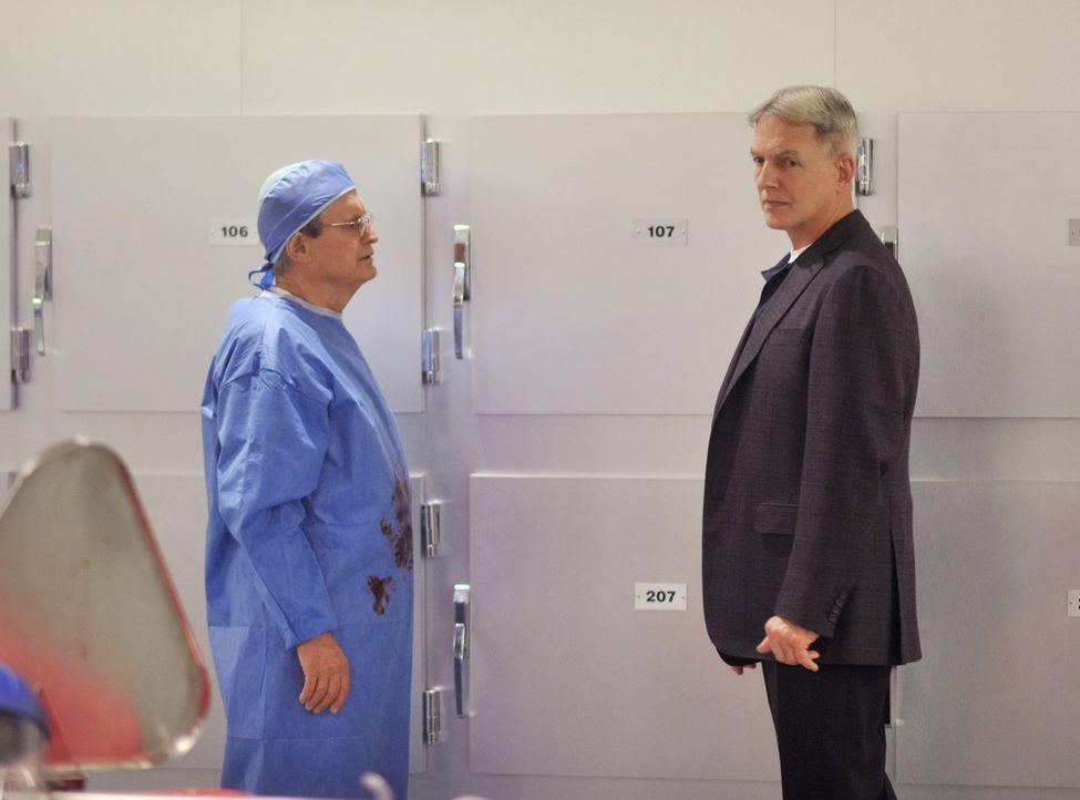 Untersuchen einen Mordfall: Ducky (David McCallum, l.) und Gibbs (Mark Harmon, r.) ... - Bildquelle: CBS Television