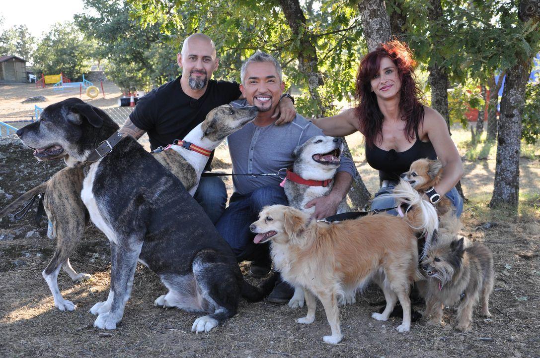 Cesar Millan: Auf den Hund gekommen in Spanien