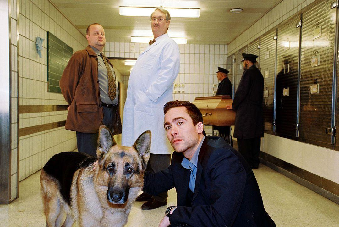 Marc (Alexander Pschill, r.), Kunz (Martin Weinek, l.), Dr. Graf (Gerhard Zemann, M.) und Rex sind in der Gerichtsmedizin. Dort wird ein Verdächtige... - Bildquelle: Ali Schafler Sat.1