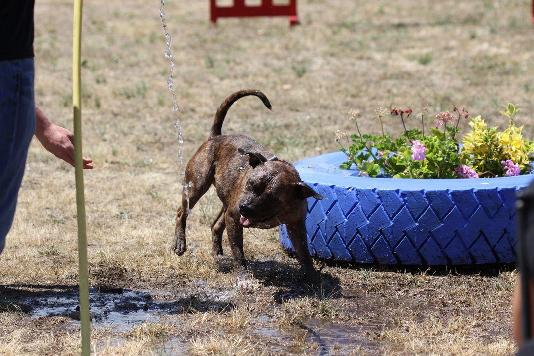 Rosie wohnte bisher im Tierheim - Bildquelle: © 360 Powwow, LLC / Belén Ruiz Lanzas