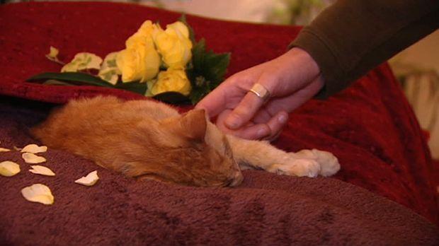 Ein Labrador mit Bandscheibenvorfall, eine Katze mit Tumor - die Tierärzte in...
