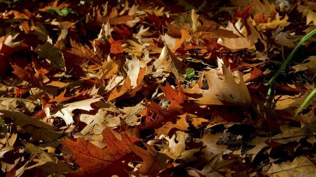 Laub-Boden-Blätter-pixabay