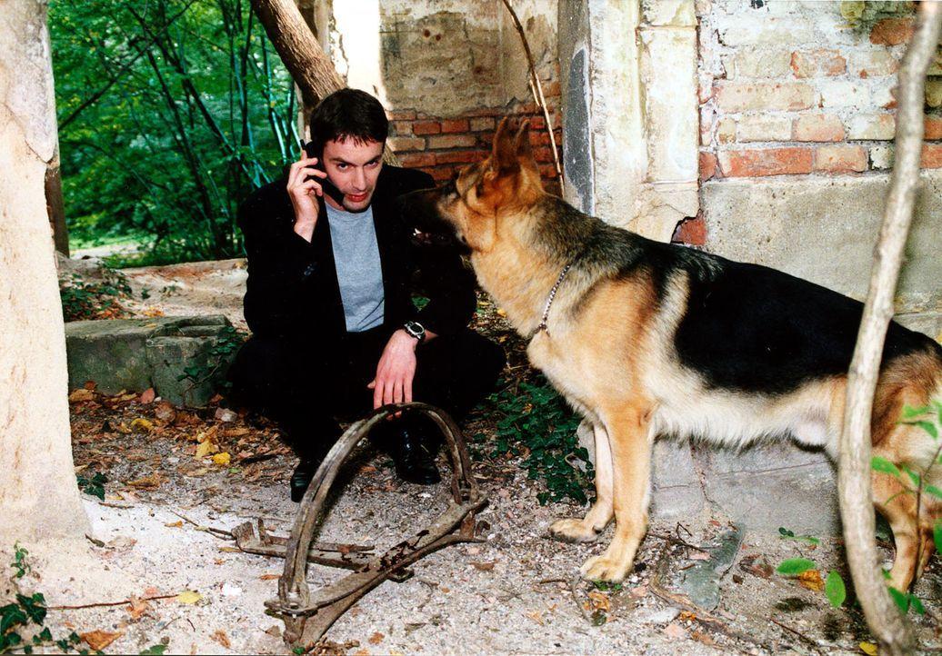 Beinahe wäre Kommissar Rex im Park in ein Fangeisen geraten. Kommissar Brandtner (Gedeon Burkhard) telefoniert sofort mit den zuständigen Kollegen. - Bildquelle: Ali Schafler Sat.1