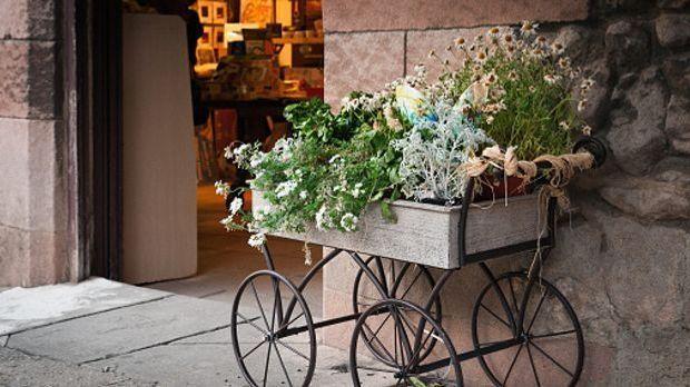 Pflanzen in einer Holzkiste, die mit Eisenrädern dekoriert ist