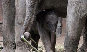 150714_Baby-Elefant_fliesstext_goetz-berlik4