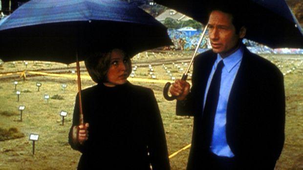 Mulder (David Duchovny, r.) und Scully (Gillian Anderson, l.) untersuchen ein...