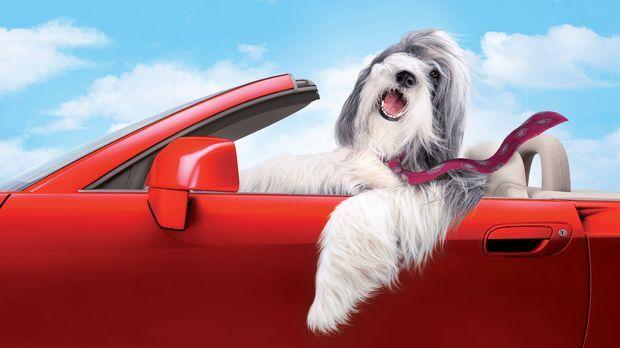 Durch einen Zufall wird Dave von dem Hirtenhund Shaggy gebissen - mit der Wir...