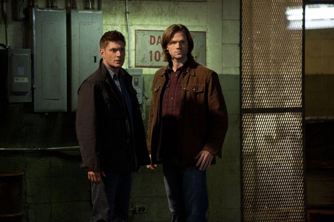 Als würden die Dämonen und Engel nicht schon genug Arbeit bedeuten, finden sich Sam (Jared Padaelcki, r.) und Dean (Jensen Ackles, l.) plötzlich zwi... - Bildquelle: Warner Bros. Television