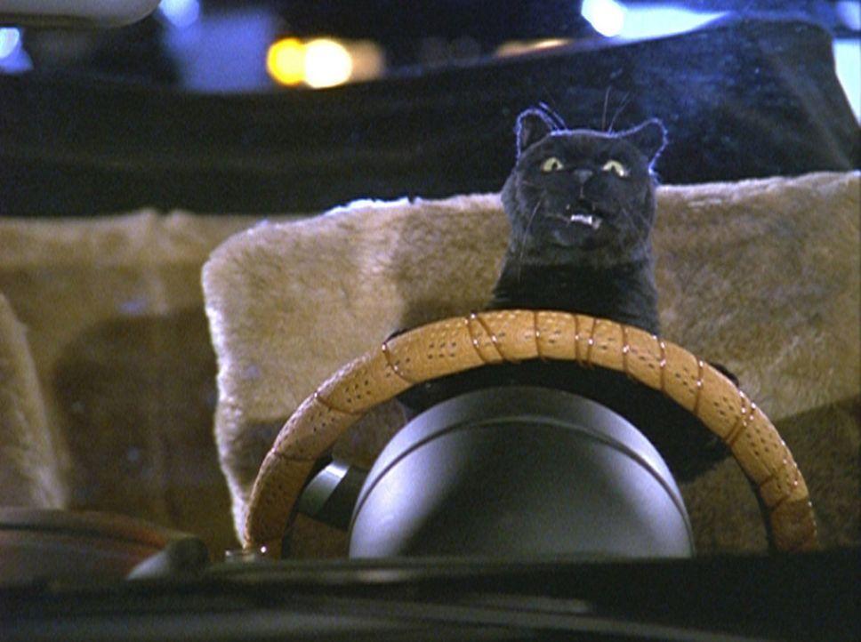 Salem macht eine Probefahrt mit dem Auto, das Hilda und Zelda für Sabrina besorgt haben. - Bildquelle: Paramount Pictures