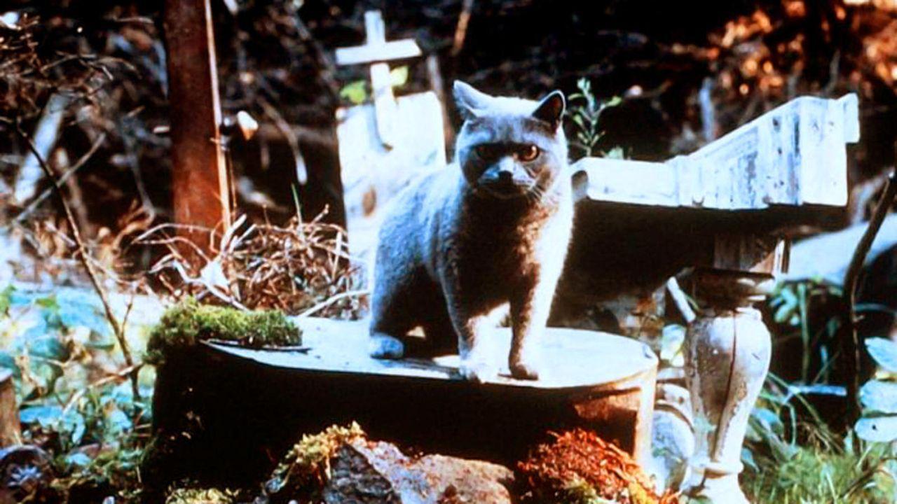 Platz 18: Friedhof der Kuscheltiere - Bildquelle: Paramount Home Entertainment (auf DVD und Blu-ray Disc erhältlich)