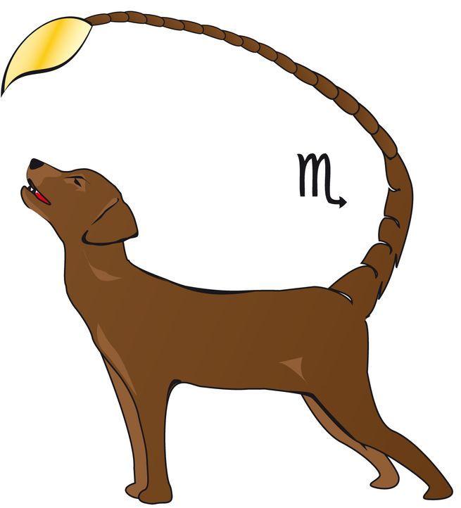 Skorpionhund Kopie