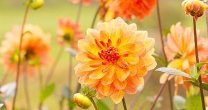 Gartengestaltung_2016_04_05_Dahlien Pflege_Bild 1_fotolia_Floydine