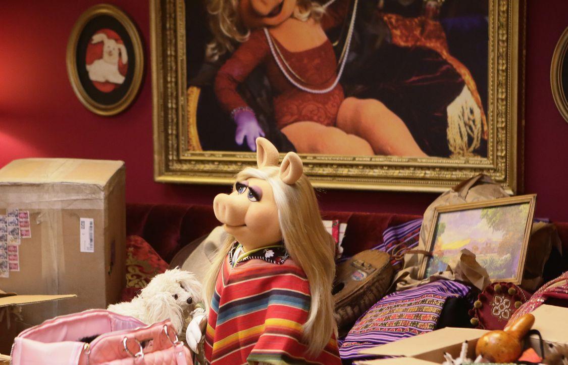 Zurück von ihrem Argentinien-Trip ist Miss Piggy wieder voller Tatendrang ... - Bildquelle: Nicole Wilder ABC Studios