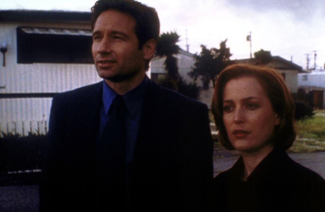 Scully (Gillian Anderson, r.) und Mulder (David Duchovny, l.) ermitteln in einem äußerst kuriosen Fall ... - Bildquelle: TM +   2000 Twentieth Century Fox Film Corporation. All Rights Reserved.