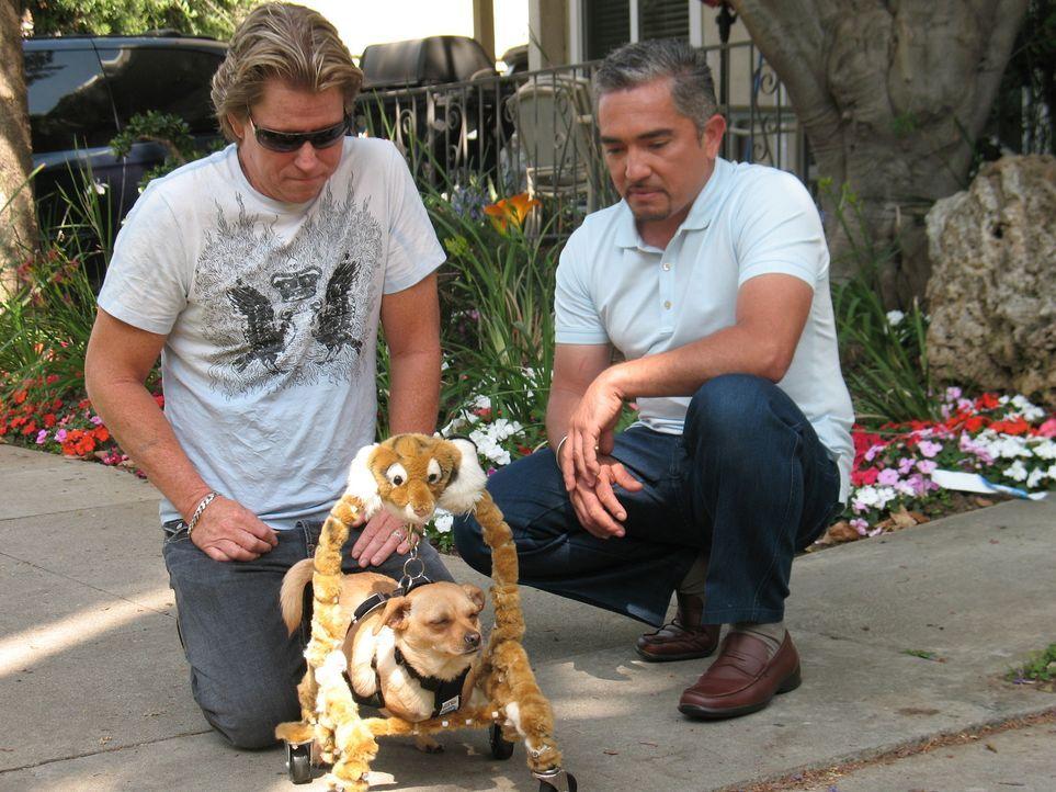 John (l.) hat Probleme mit seinem zweibeinigen Hund Binkey. Kann Cesar Millan (r.) helfen? - Bildquelle: Rive Gauche Intern. Television