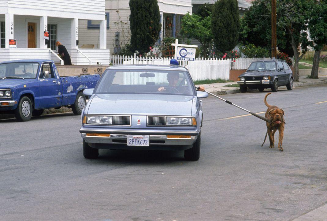 Ein gemeinsamer Spaziergang: Huutsch (r.) und Scott (Tom Hanks, l.) ... - Bildquelle: Touchstone Pictures