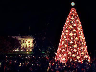 Galerie Weihnachtsbäume - Frühstücksfernsehen - Bildquelle: AFP